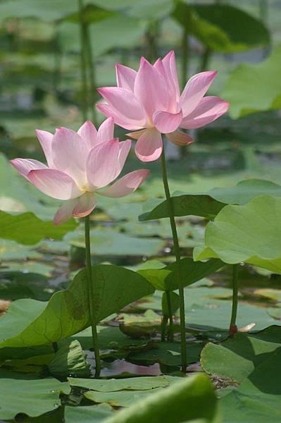 佛教電子書圖片-461