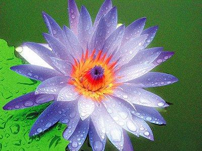 佛教電子書圖片-524
