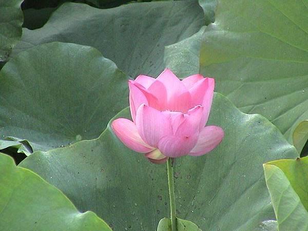 佛教電子書圖片-600