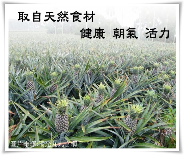 陽光九九1-crop