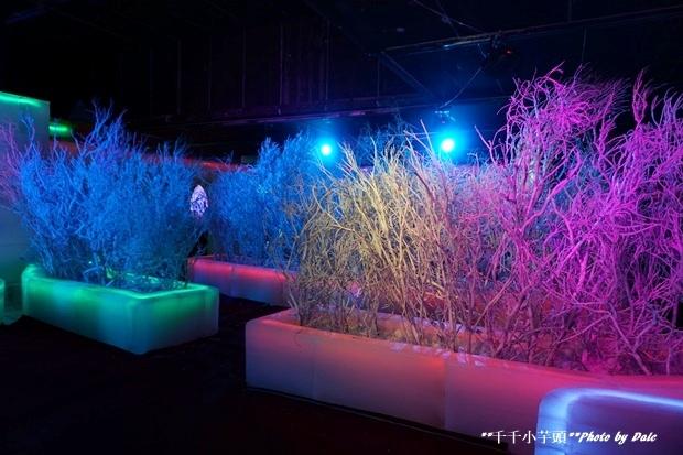 高雄凍物園哈爾濱藝術展60.JPG
