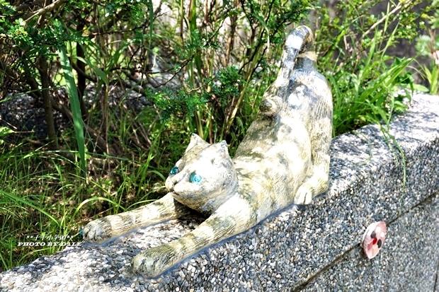 貓咪階梯4.JPG