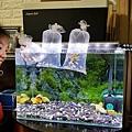Aqua Eri專利技術免換水過濾系統30.jpg