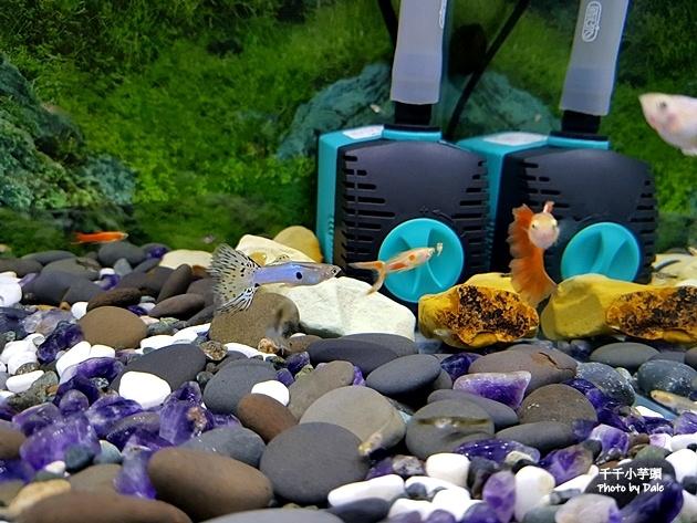 Aqua Eri專利技術免換水過濾系統46