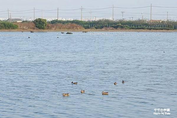 永安濕地11.JPG