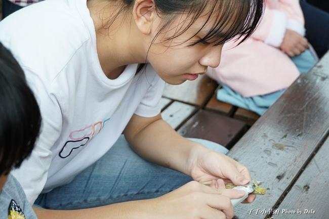 咖啡樹枝鉛筆DIY6.JPG