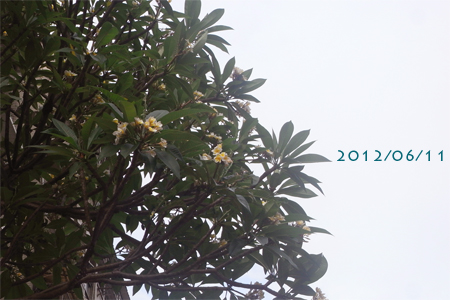 20120611