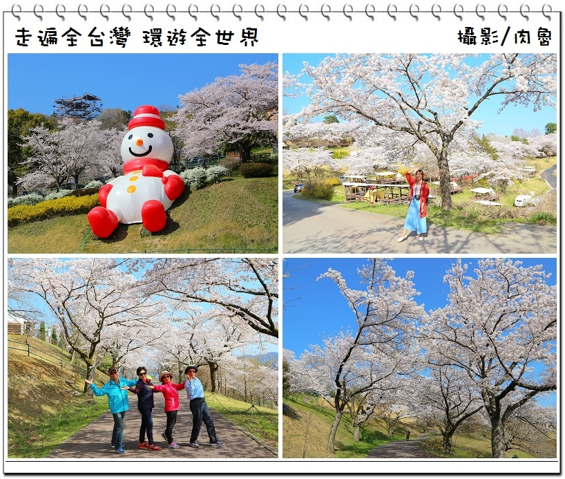 日本櫻花|帶爸媽跟團輕鬆來去日本賞櫻 關東地區最大級的相模湖櫻花祭 無敵宇宙超級壯觀的白色櫻花海