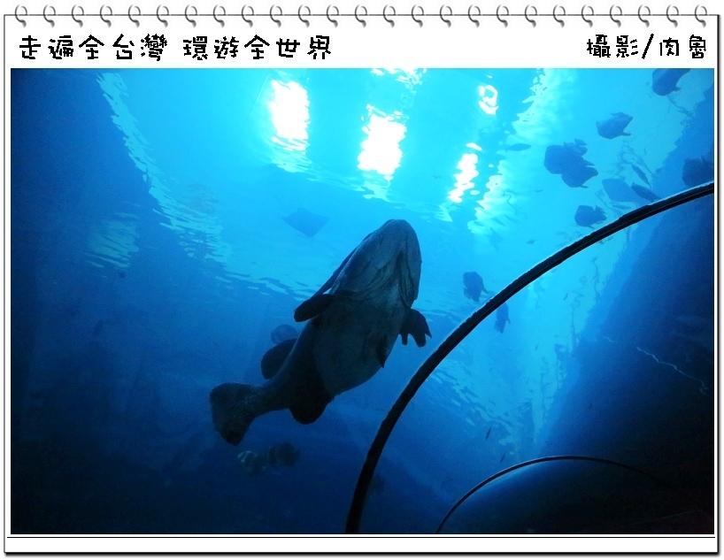 nEO_IMG_31.jpg
