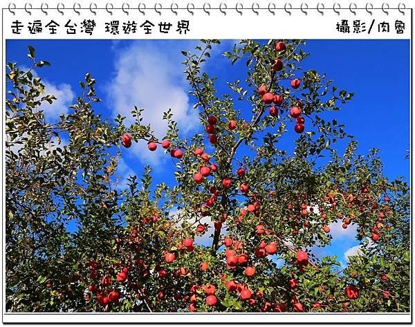 nEO_IMG_73.jpg