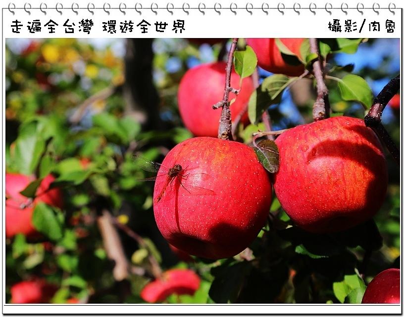nEO_IMG_76.jpg