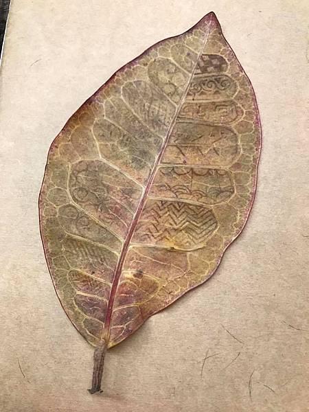 樹葉6.jpg