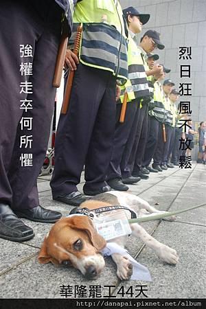 華隆罷工44天-台中狗市民嘟嘟.jpg