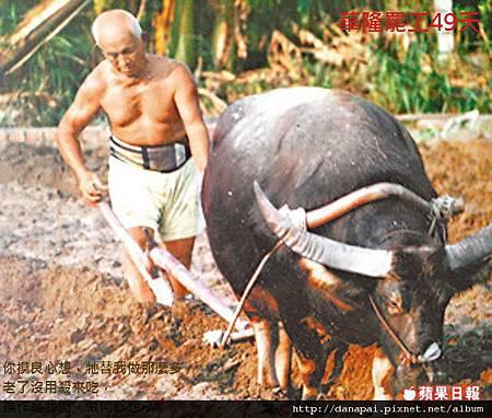 華隆罷工49天-老牛