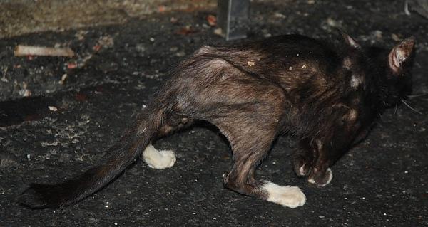 跛腳黑貓背面2.jpg