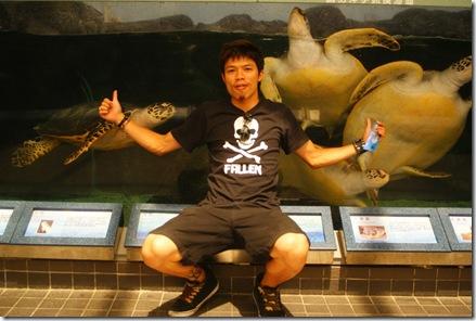 海龜當背景