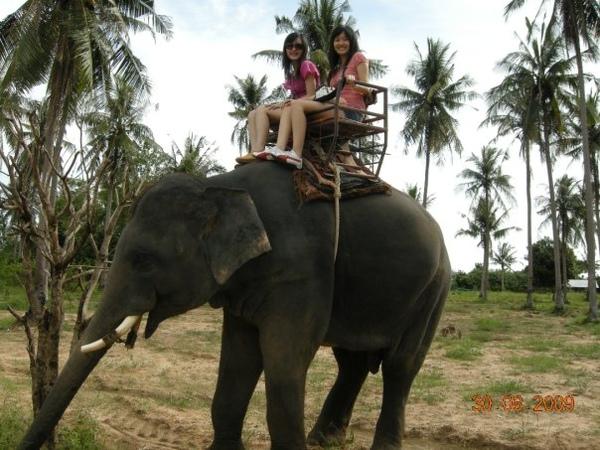 少不了騎大象