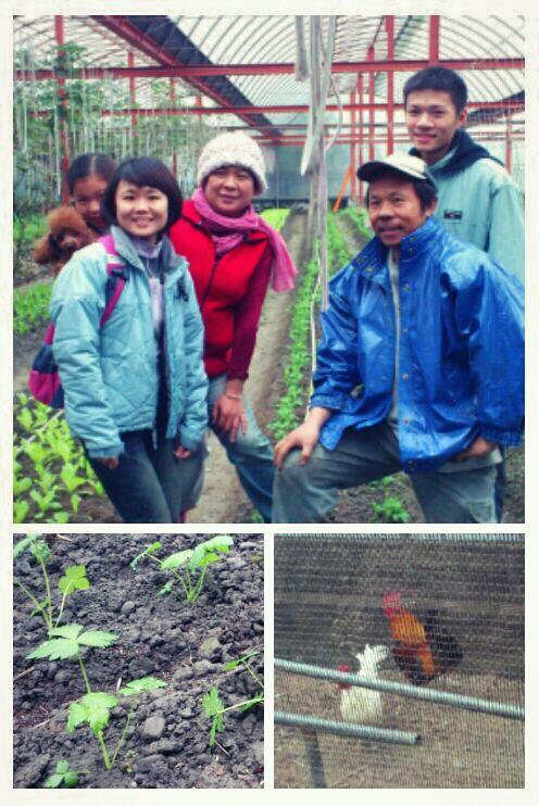 宜蘭源禾綠農場:(元旦假期)在種菜與養雞中,迎接2013年的到來!