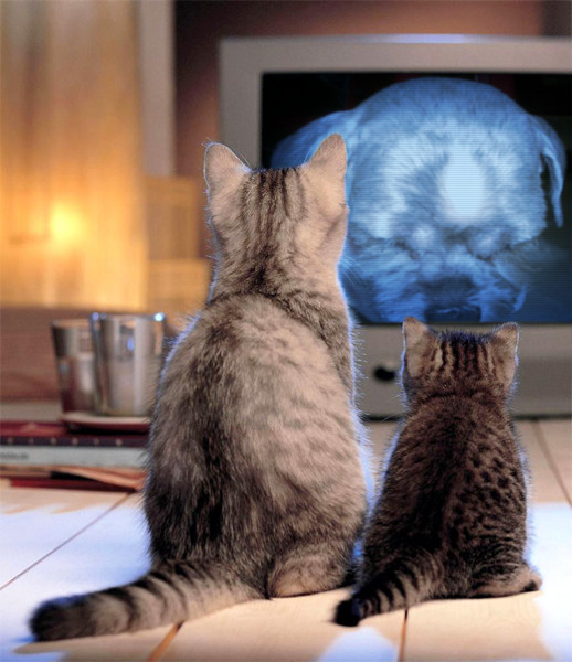 PhotoFunia_cat1.jpg