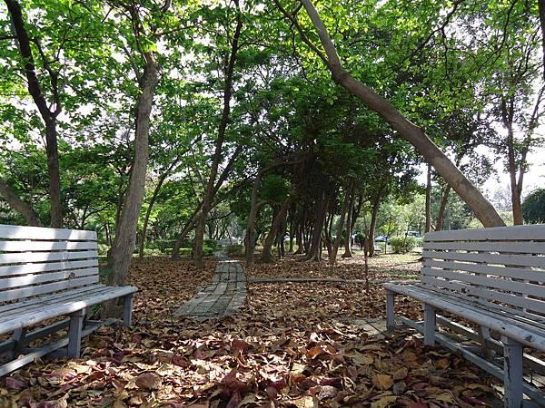 原始森林區 (1)