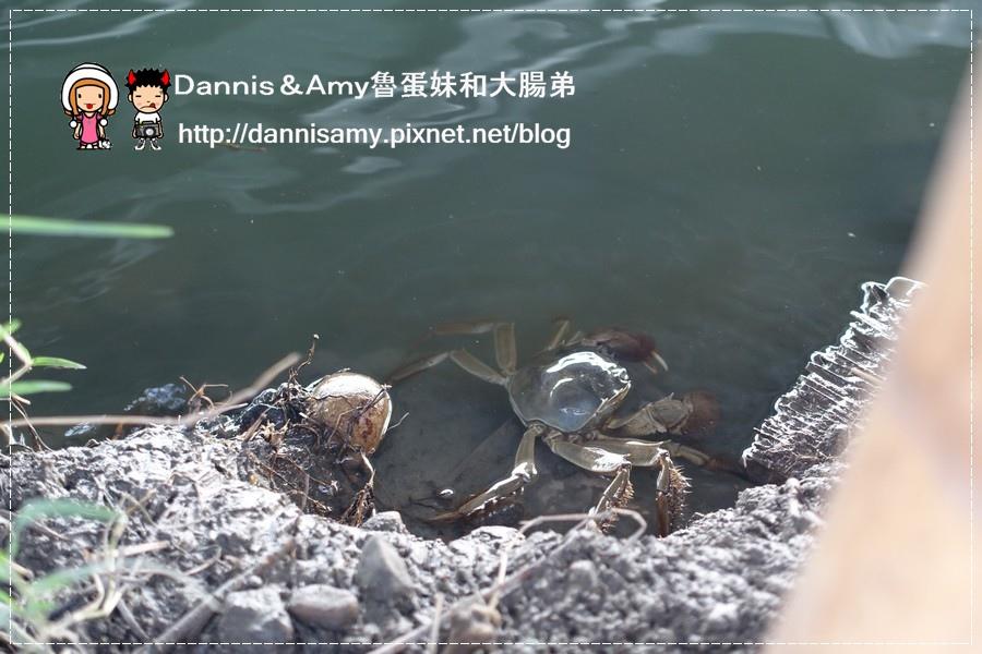 紅心大閘蟹 泰國蝦 生態養殖觀光農場 (49).jpg