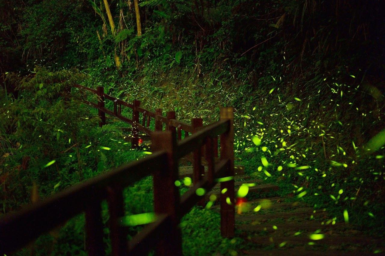 圓潭自然生態公園5