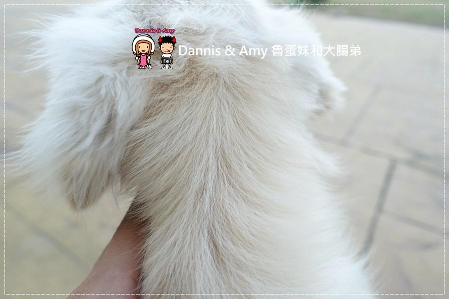 20161016《豆皮寵物日記》幫狗洗澡洗香香之手忙腳亂篇x Boogie咘唧犬貓專用洗毛露︱影片 (27).jpg