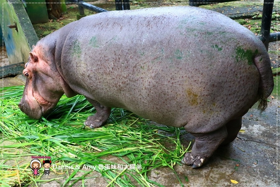 20170422《新竹景點》令新竹人驕傲的新竹市立動物園即將「請假」啦!。期待「新」動物園的模樣|(影片) (46).jpg