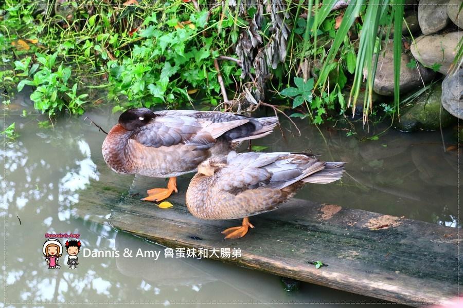 20170422《新竹景點》令新竹人驕傲的新竹市立動物園即將「請假」啦!。期待「新」動物園的模樣|(影片) (45).jpg