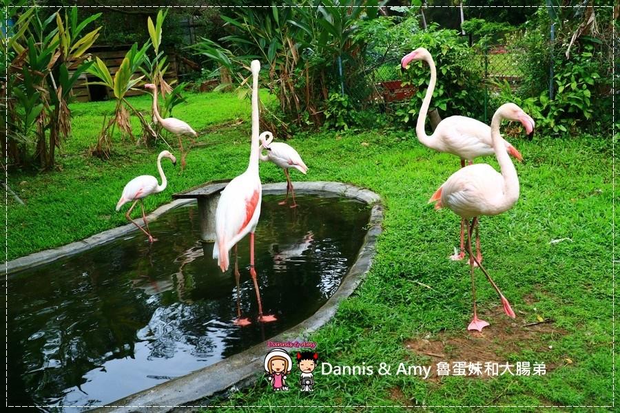 20170422《新竹景點》令新竹人驕傲的新竹市立動物園即將「請假」啦!。期待「新」動物園的模樣|(影片) (41).jpg