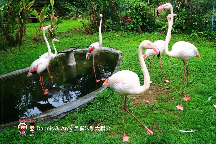 20170422《新竹景點》令新竹人驕傲的新竹市立動物園即將「請假」啦!。期待「新」動物園的模樣|(影片) (40).jpg