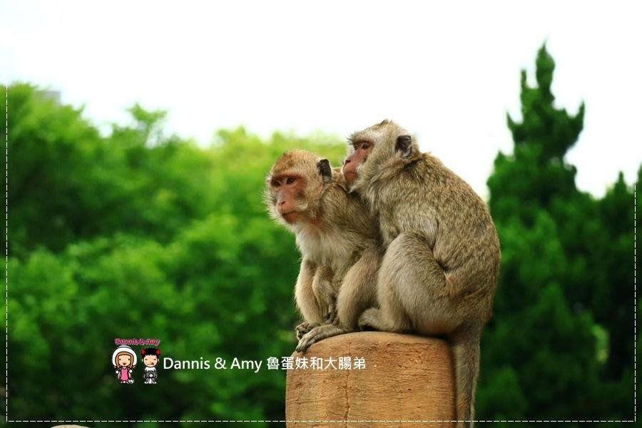20170422《新竹景點》令新竹人驕傲的新竹市立動物園即將「請假」啦!。期待「新」動物園的模樣|(影片) (36).jpg