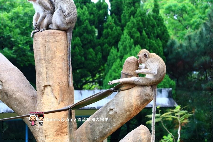 20170422《新竹景點》令新竹人驕傲的新竹市立動物園即將「請假」啦!。期待「新」動物園的模樣|(影片) (35).jpg