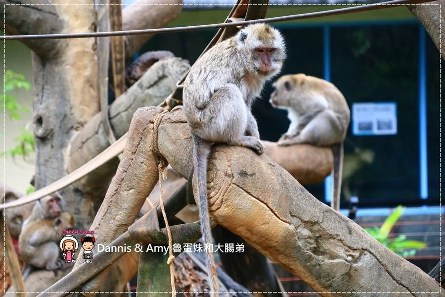 20170422《新竹景點》令新竹人驕傲的新竹市立動物園即將「請假」啦!。期待「新」動物園的模樣|(影片) (34).jpg