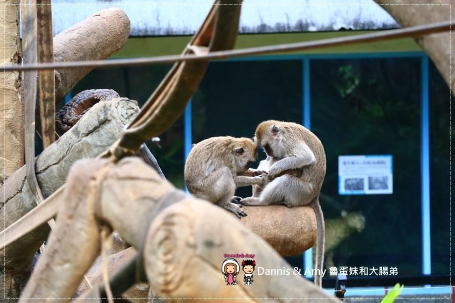 20170422《新竹景點》令新竹人驕傲的新竹市立動物園即將「請假」啦!。期待「新」動物園的模樣|(影片) (33).jpg