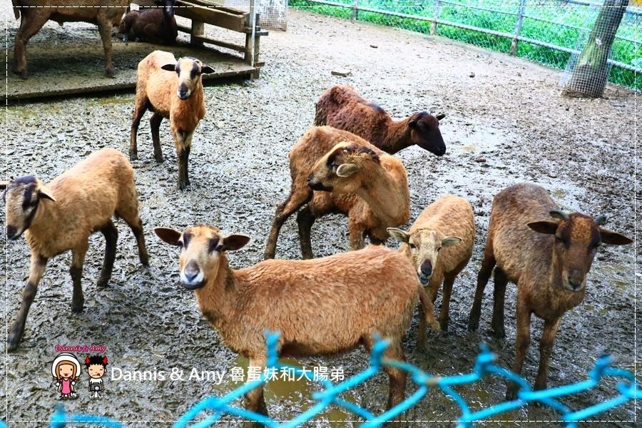 20170422《新竹景點》令新竹人驕傲的新竹市立動物園即將「請假」啦!。期待「新」動物園的模樣|(影片) (27).jpg