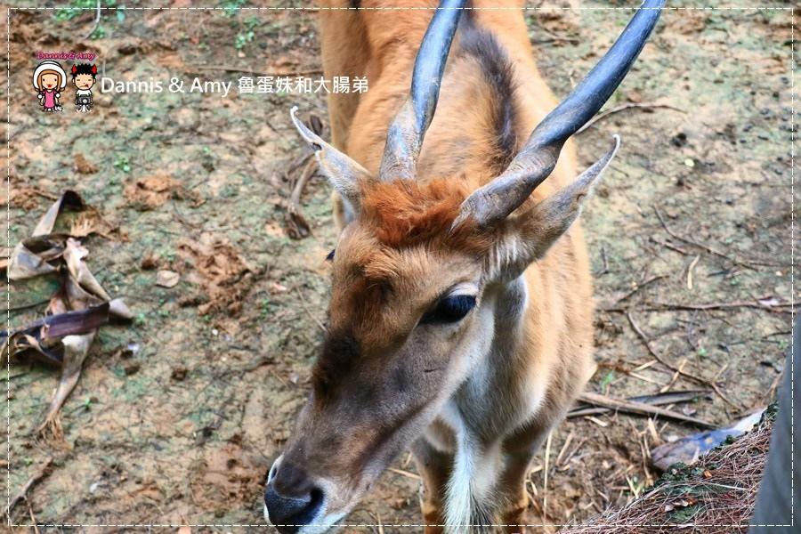 20170422《新竹景點》令新竹人驕傲的新竹市立動物園即將「請假」啦!。期待「新」動物園的模樣|(影片) (24).jpg