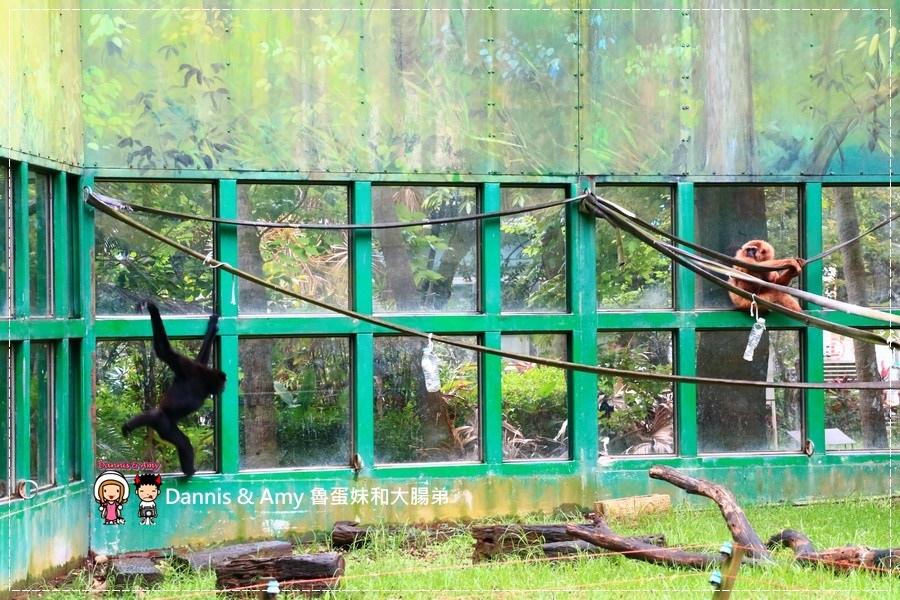 20170422《新竹景點》令新竹人驕傲的新竹市立動物園即將「請假」啦!。期待「新」動物園的模樣|(影片) (22).jpg