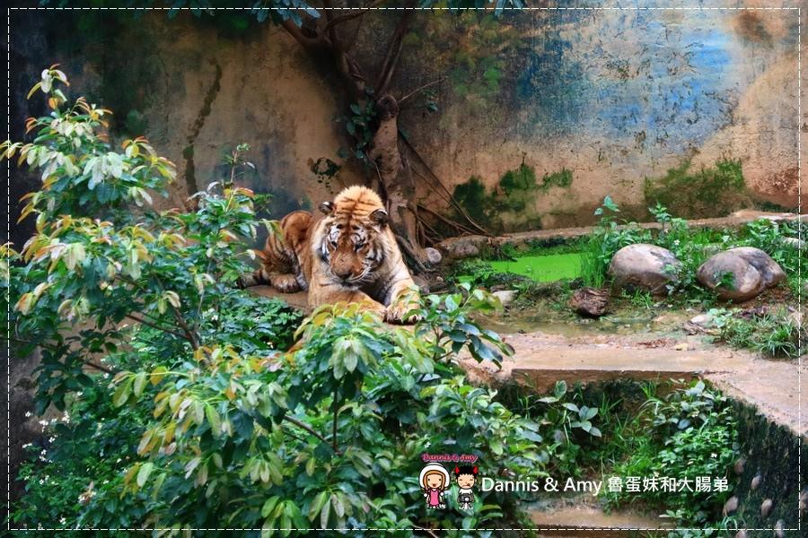 20170422《新竹景點》令新竹人驕傲的新竹市立動物園即將「請假」啦!。期待「新」動物園的模樣|(影片) (18).jpg