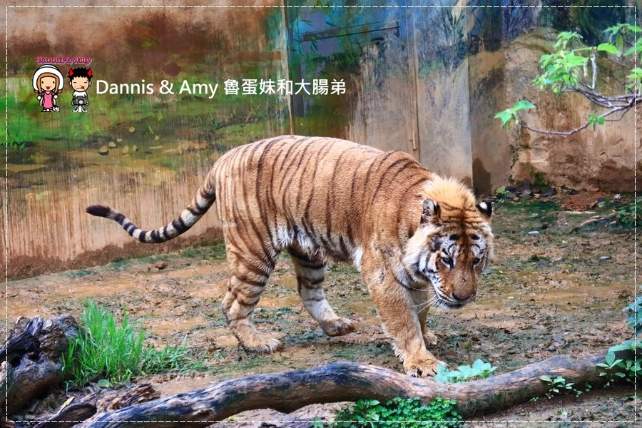 20170422《新竹景點》令新竹人驕傲的新竹市立動物園即將「請假」啦!。期待「新」動物園的模樣|(影片) (17).jpg
