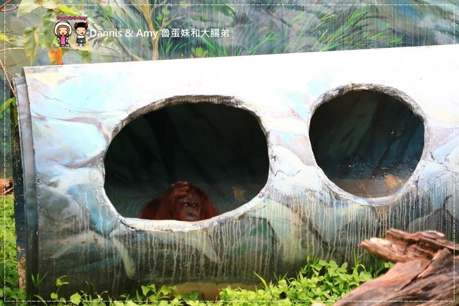 20170422《新竹景點》令新竹人驕傲的新竹市立動物園即將「請假」啦!。期待「新」動物園的模樣|(影片) (15).jpg