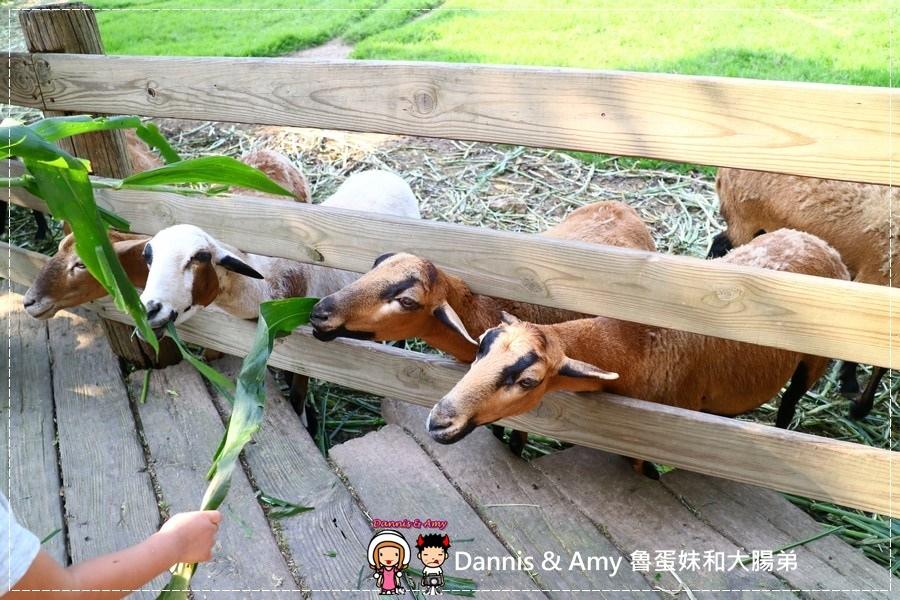 20170430《苗栗親子景點》飛牛牧場。偶像劇拍攝景點。動物零距離距接觸好去處|那裏買優惠門票?家樂福線上購物分享(影片) (10).jpg