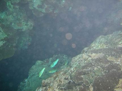 海裡的魚兒