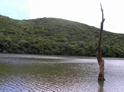 佇立於大天池的枯木