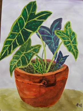 不知名植物