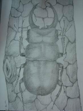 鬼艷鍬形蟲