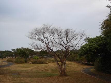 另一棵枯木
