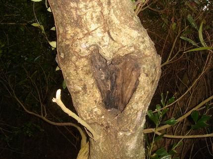 有心型樹洞耶