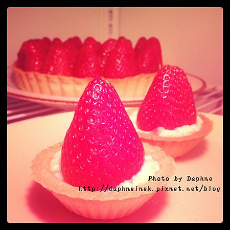 草莓乳酪塔.png