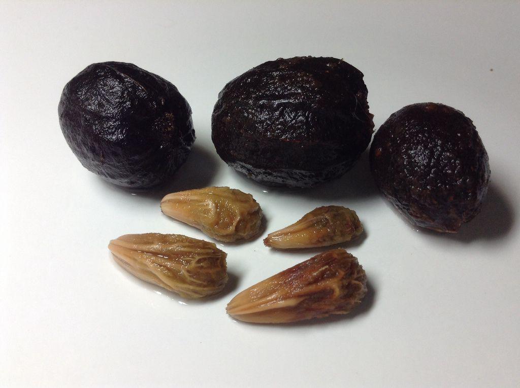 霸王櫚、藍棕櫚種子
